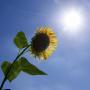 真夏の太陽に焼かれて燃え尽きた 日本放浪せどり旅21~24日目